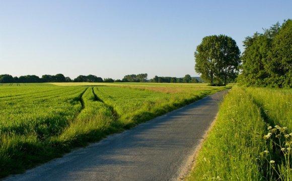 Летняя дорога среди поля